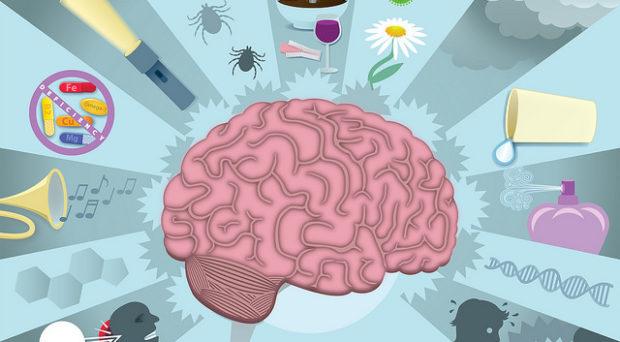 avaliacoes reabilitacoes neuropsicologicas 114
