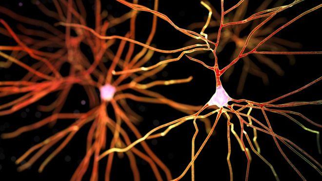 avaliacoes reabilitacoes neuropsicologicas 193
